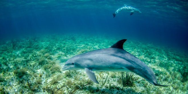 What Not To Miss on Your Dolphin Watching Tour